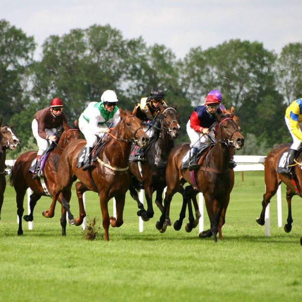 Newbury Race Day 19 July &Ascot Race Day 26 July